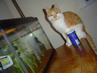 jack is a sweetheart, but the fish don't think so