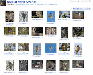 Owls of North America Flickr Group