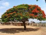 Mon arbre en ligne