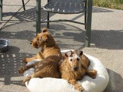Best Buddies Beatrix and Benny