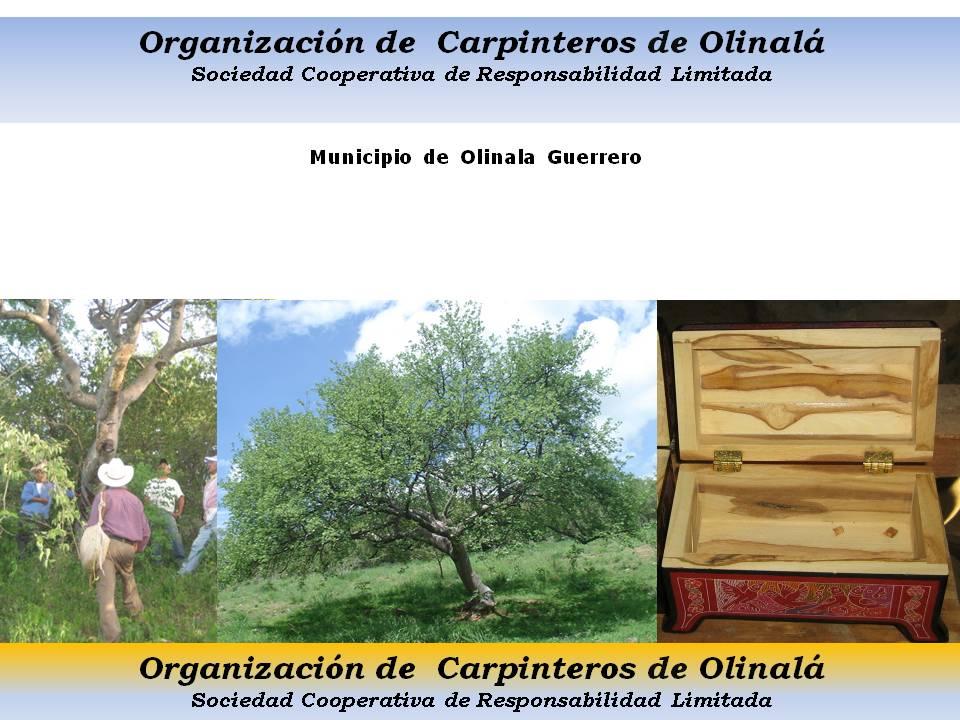Organizacion de carpinteros de olinala for Organizacion de viveros
