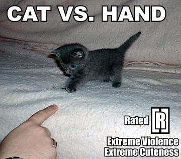 cat vs hand Lolcat Lolcatz Lowlcaz art graphics,