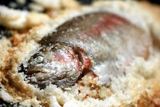 hal a feltört só-ágyban