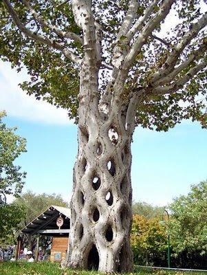 pohon unik dan aneh:gambar-gambar aneh