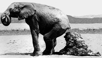 Resultado de imagen de caca de elefante