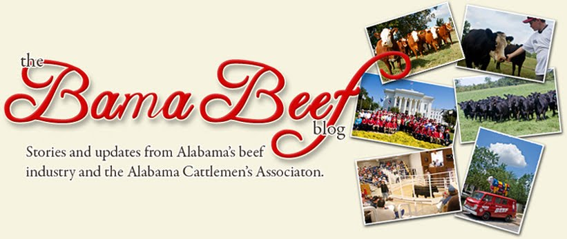 Bama Beef Blog