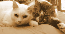 Lily & Boggie