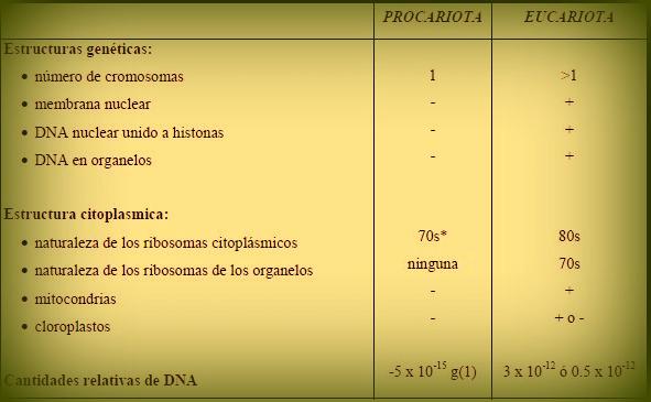 celula procariota y eucariota. Procariotas y Eucariotas
