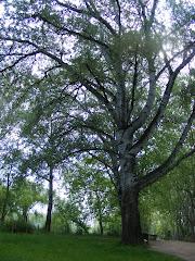 """""""Los árboles tienen una vida secreta que sólo les es dada conocer a los que trepan a ellos"""""""