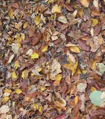 """""""No puedo ser sin que las hojas vuelen y vuelvan a la tierra"""""""