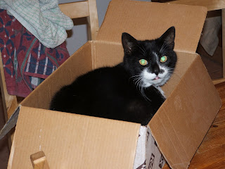 Molly in a box March 2007