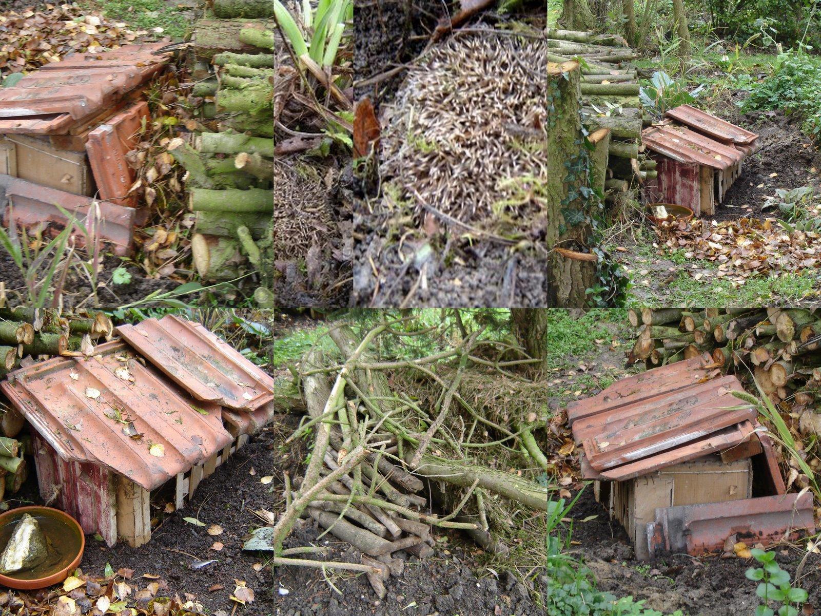 Jardin de la sauvagine un petit coin sauvage pour les h rissons la sauvagine - Cabane herisson jardin reims ...