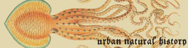 Urban Natural History