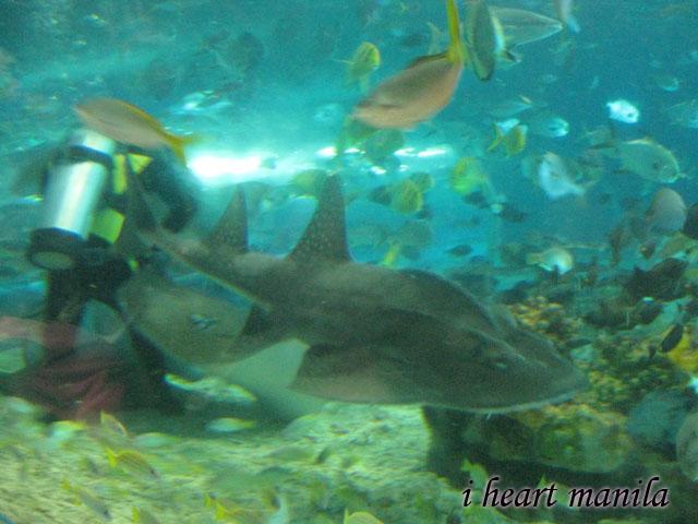 manila ocean park - fish feeding