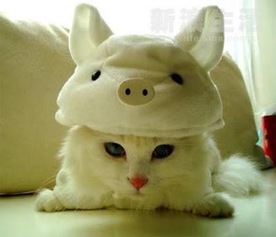 Tu primer tema - Página 3 Cat+pig