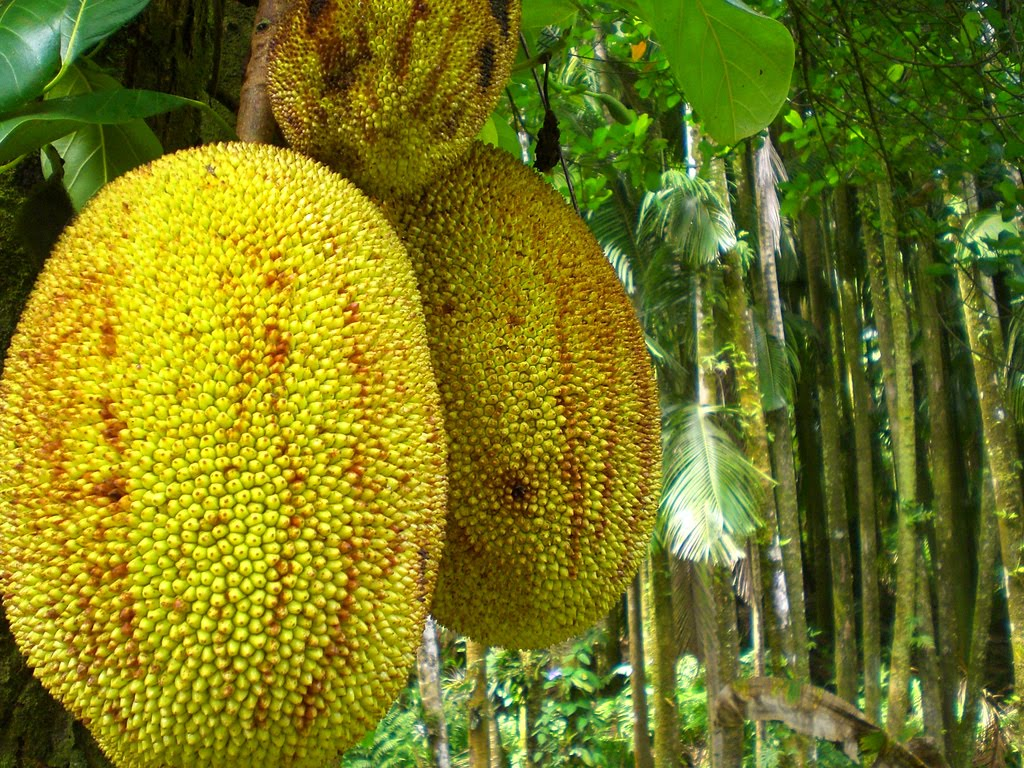 Phronesisaical Jackfruit