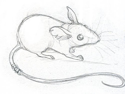 Line Drawing Rat : Art and adventure: pizzicato 2