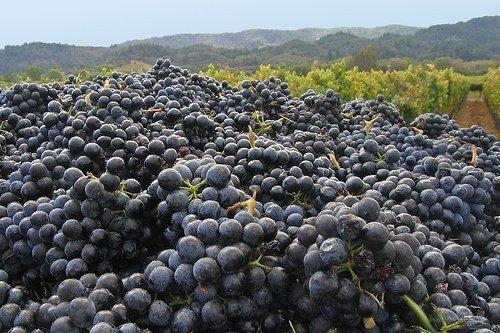 [grapes]