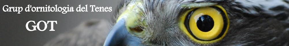 GOT - Grup d'Ornitologia del tenes