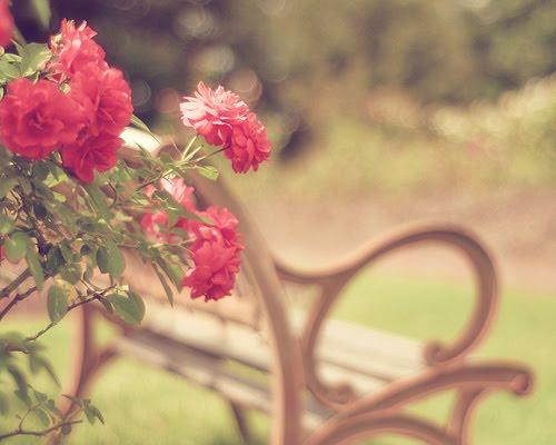 banco de jardim poesia:Florejar ♪ : Chico Buarque