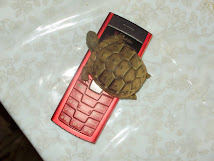 Turtle on mobile