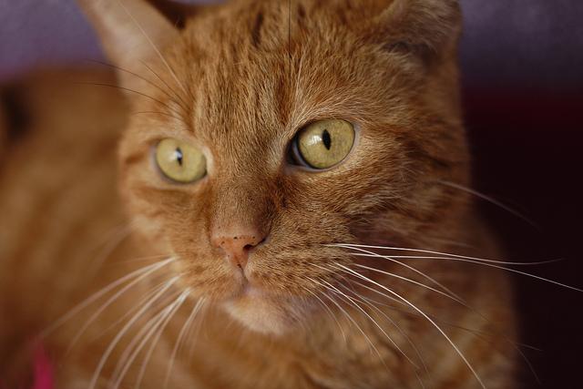 Ottawa Humane Society Cats Declawed