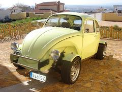 Escarabajo16