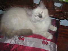 Edward posing
