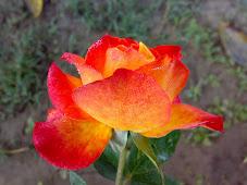 """""""सरस पायस"""" के संपादक व छायाकार का विस्तृत परिचय जानने के लिए फूल पर क्लिक् कीजिए"""