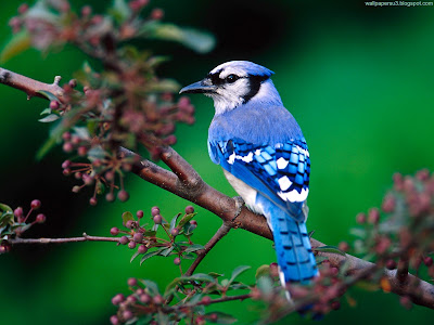 Bird Normal Resolution Wallpaper 49