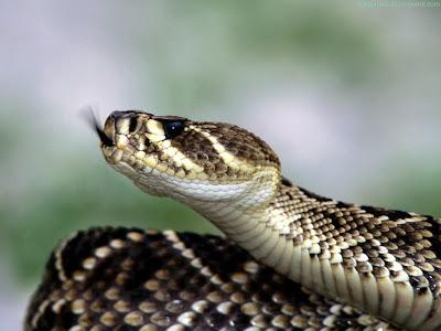 Snake Standard Resolution Wallpaper 5