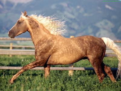 Horse Standard Resolution wallpaper 9