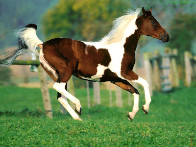 Horse Standard Resolution Wallpaper 32