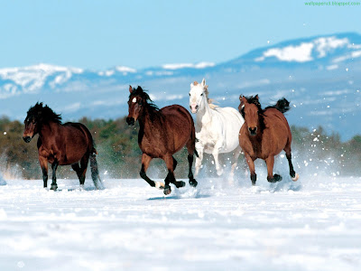 Horse Standard Resolution Wallpaper 36