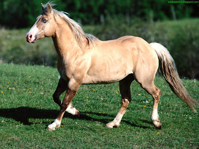 Horse Standard Resolution Wallpaper 38