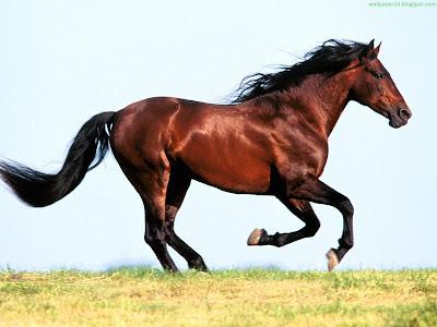 Horse Standard Resolution Wallpaper 45
