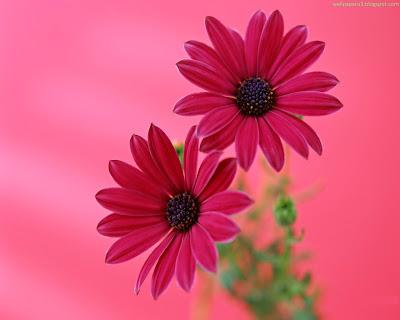 Flower Standard Wallpaper 101