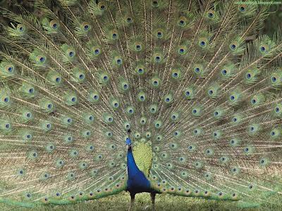 Birds Standard Resolution Wallpaper 61