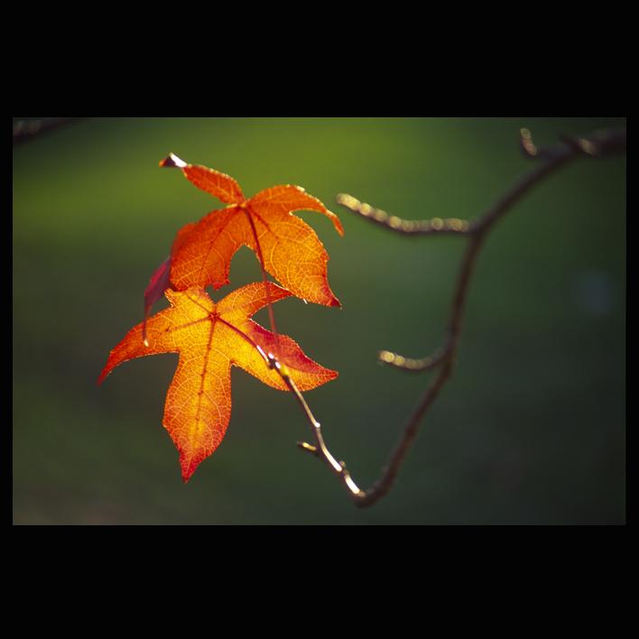 Stiže jesen Autumn-leaves