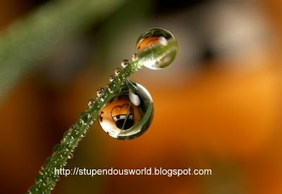 Photography of WaterDrop