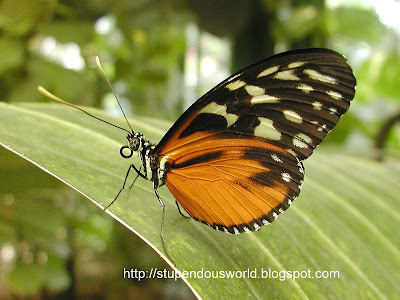 Cool Photos of Butterfly