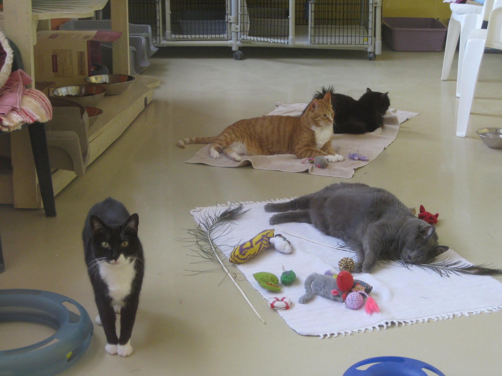 Feline Rescue Cat Tales Wayne and the Gang