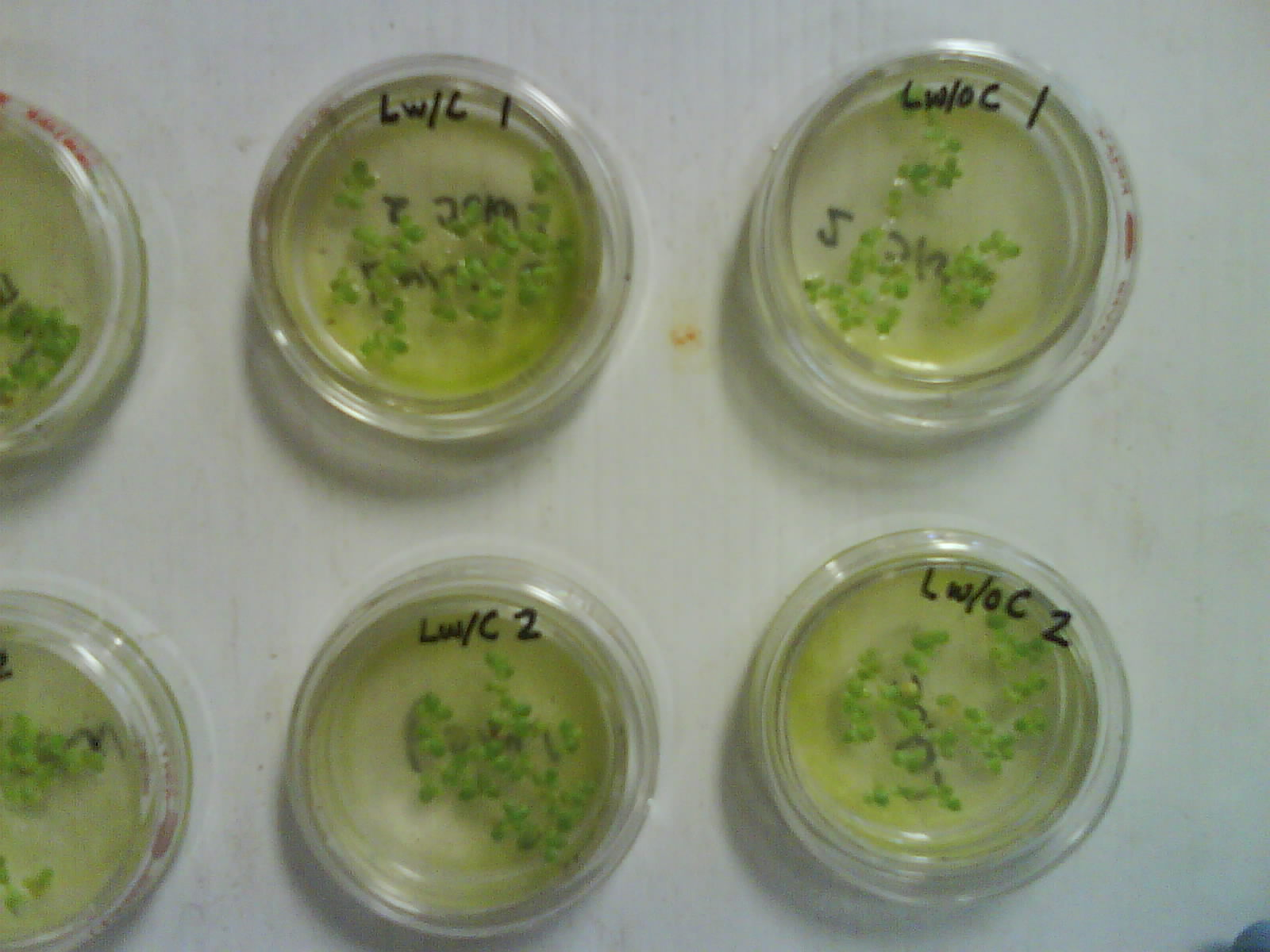effect of minerals deficiencies towards the growth of lemna sp Evaluation of chitooligosaccharide application on mineral  on plant growth and mineral allocation was investigated to better understand the effect of this plant .