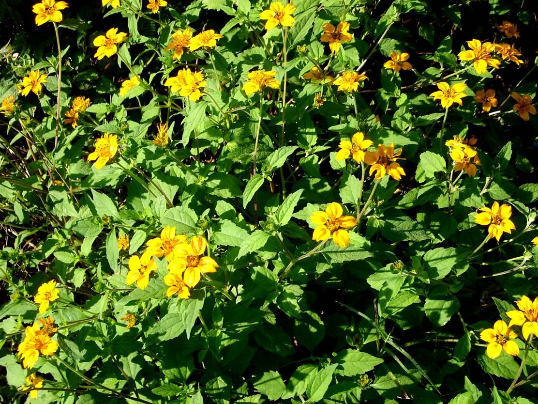 Ecolog a dzidzant n ecolog a dzidzant n arbustos de for Arbustos con flores