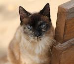 Much missed Feline