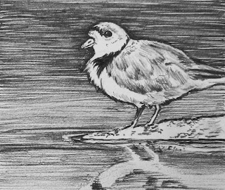 piping plover research paper Sarah saunders found inspiration to study saunders is helping to conserve the great lakes piping plover as a post-doctoral research associate at.