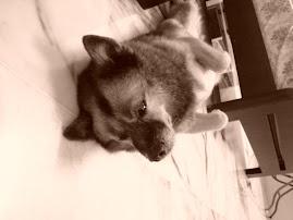 My cute doggie!
