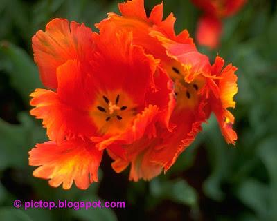 شعر درمورد ناخن عکسینه: دسته گل های زیبا