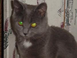 Penelope MIA