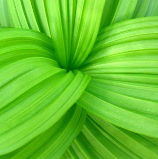 bright green leaf photograph
